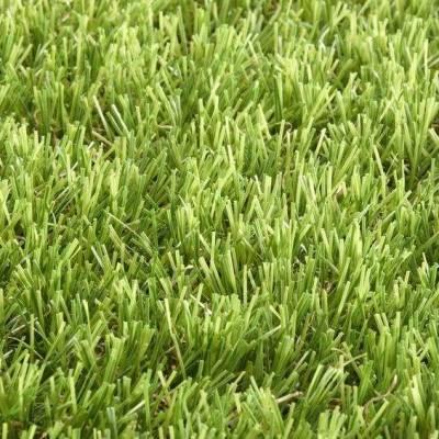Lano Easy Lawn Verbena