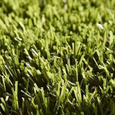Lano Easy Lawn Rosemary