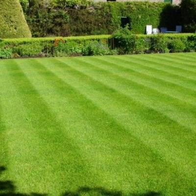 Lano Pro Lawn Multi Lane Lawn Grass